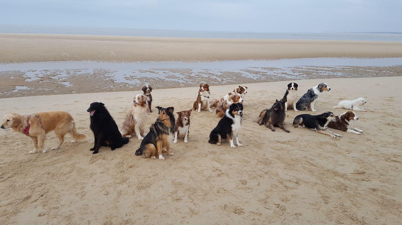 Chiens du HCCS sur la plage